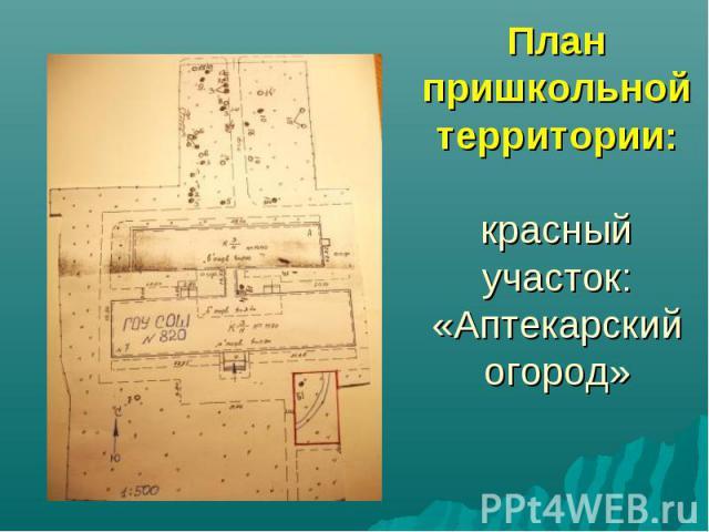 План пришкольной территории: красный участок: «Аптекарский огород»