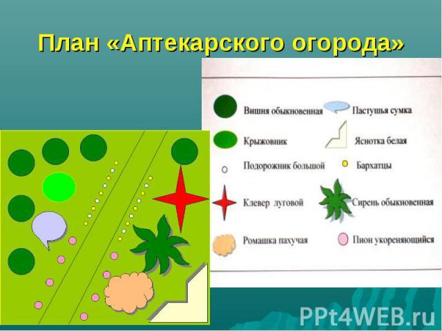 План «Аптекарского огорода»