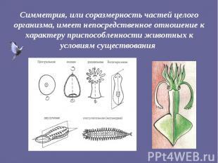 Симметрия, или соразмерность частей целого организма, имеет непосредственное отн