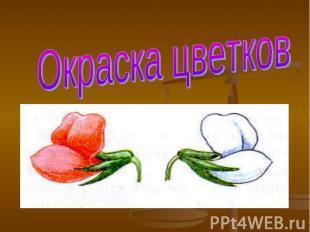 Окраска цветков