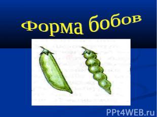 Форма бобов
