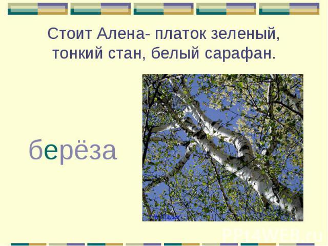 Стоит Алена- платок зеленый, тонкий стан, белый сарафан. берёза