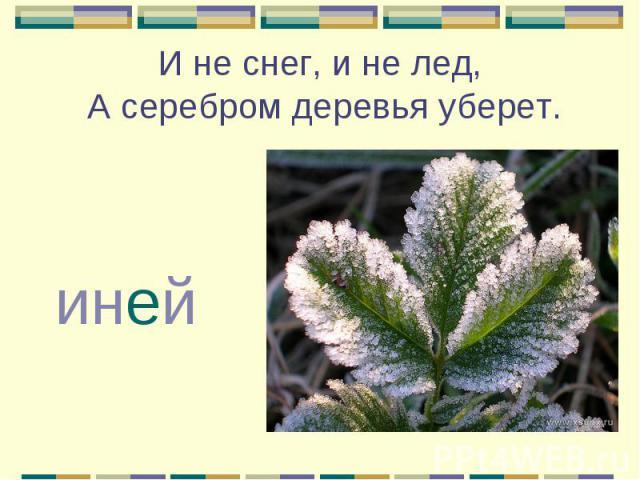И не снег, и не лед, А серебром деревья уберет. иней