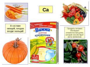 В составе овощей, плодов входит кальций Продукты питания обогащают элементом кал