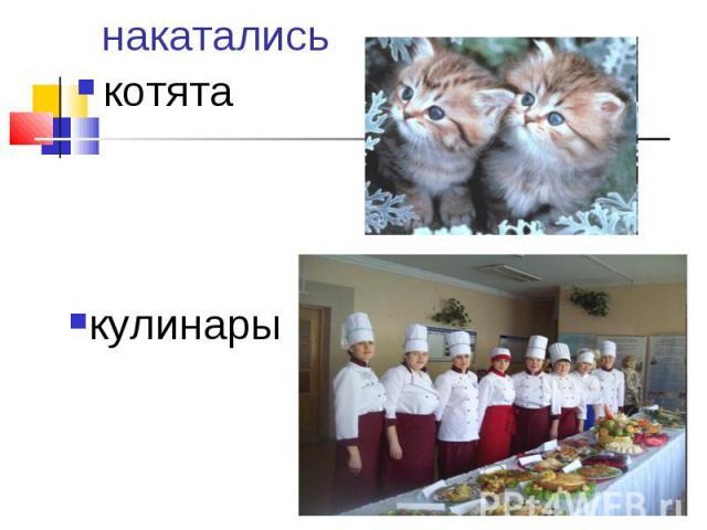 накатались котята кулинары