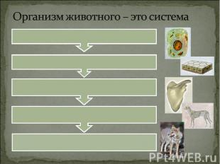 Организм животного – это система