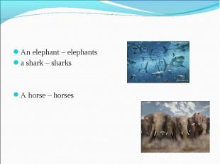 An elephant – elephants a shark – sharks A horse – horses