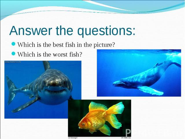 Answer the questions: Which is the best fish in the picture? Which is the worst fish?