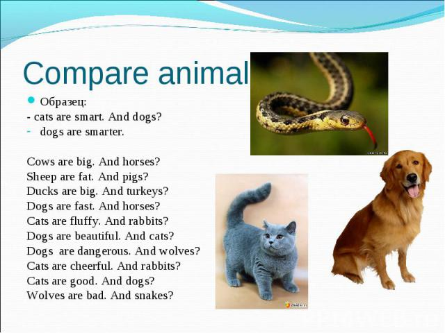 Compare animals Образец: - cats are smart. And dogs? dogs are smarter. Cows are big. And horses? Sheep are fat. And pigs? Ducks are big. And turkeys? Dogs are fast. And horses? Cats are fluffy. And rabbits? Dogs are beautiful. And cats? Dogs are dan…