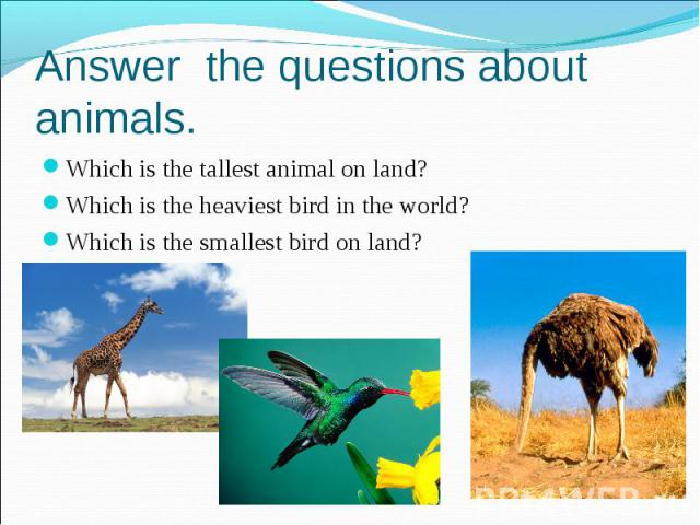 Answer the questions about animals. Which is the tallest animal on land? Which is the heaviest bird in the world? Which is the smallest bird on land?