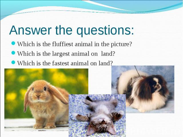 Answer the questions: Which is the fluffiest animal in the picture? Which is the largest animal on land? Which is the fastest animal on land?