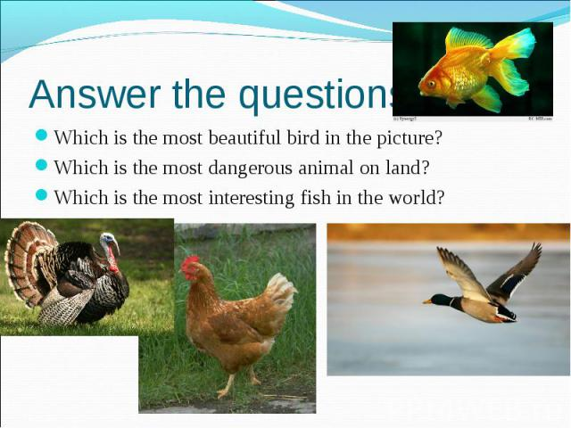 Answer the questions: Which is the most beautiful bird in the picture? Which is the most dangerous animal on land? Which is the most interesting fish in the world?