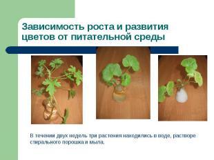 Зависимость роста и развития цветов от питательной среды В течении двух недель т