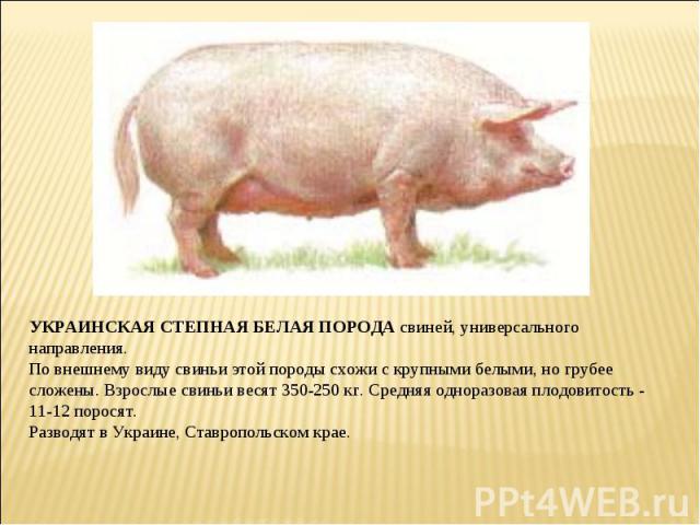 чем ответить украинская степная белая порода свиней следует обратить