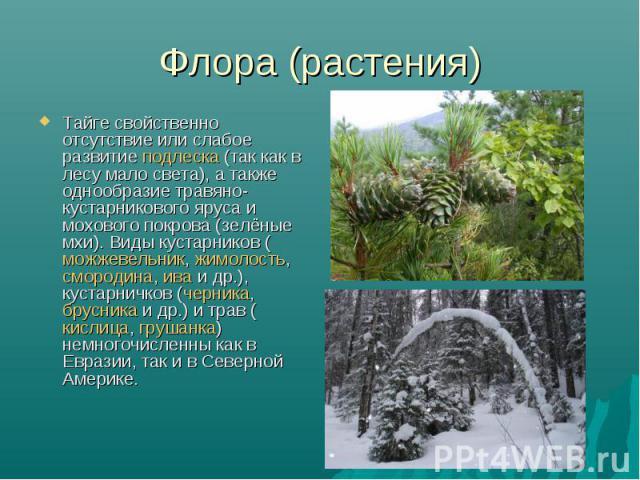 Флора (растения) Тайге свойственно отсутствие или слабое развитие подлеска (так как в лесу мало света), а также однообразие травяно-кустарникового яруса и мохового покрова (зелёные мхи). Виды кустарников (можжевельник, жимолость, смородина, ива и др…