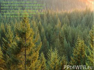 Главное же богатство тайги - лес. Большое количество лесов вырубается именно в э