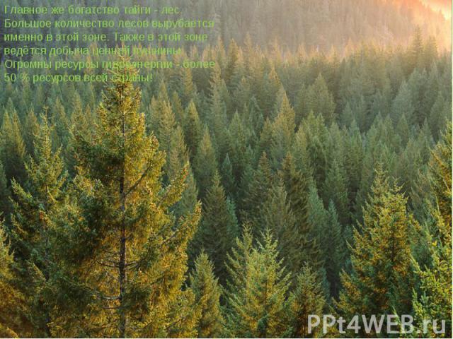 Главное же богатство тайги - лес. Большое количество лесов вырубается именно в этой зоне. Также в этой зоне ведётся добыча ценной пушнины. Огромны ресурсы гидроэнергии - более 50 % ресурсов всей страны!