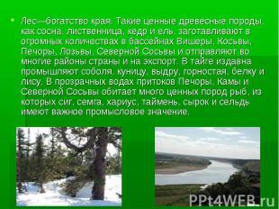 Лес—богатство края. Такие ценные древесные породы, как сосна, лиственница, кедр