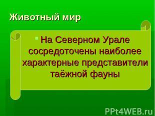 Животный мир На Северном Урале сосредоточены наиболее характерные представители