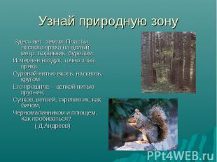 Узнай природную зону Здесь нет земли. Пласты лесного праха на целый метр. Коряжн
