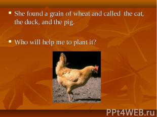 She found a grain of wheat and called the cat, the duck, and the pig. Who will h