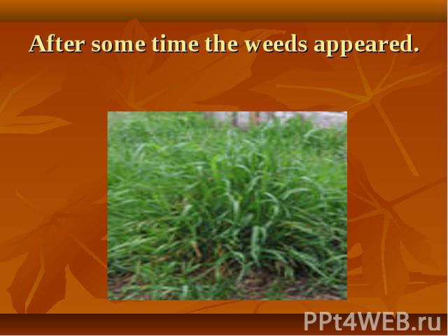 After some time the weeds appeared.
