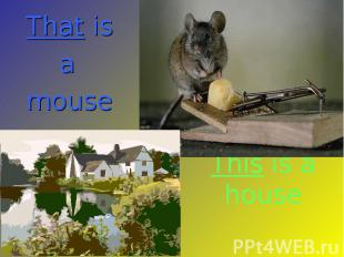 That is a mouse This is a house