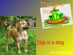 That is a frog This is a dog