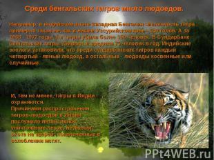 Среди бенгальских тигров много людоедов. Например, в индийском штате Западная Бе
