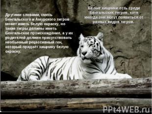 Другими словами, смесь Бенгальского и Амурского тигров может иметь белую окраску