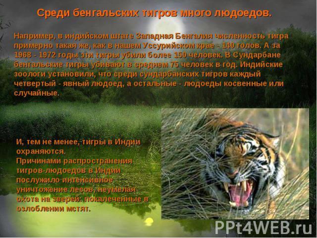 Среди бенгальских тигров много людоедов. Например, в индийском штате Западная Бенгалия численность тигра примерно такая же, как в нашем Уссурийском крае - 140 голов. А за 1968 - 1972 годы эти тигры убили более 150 человек. В Сундарбане бенгальские т…