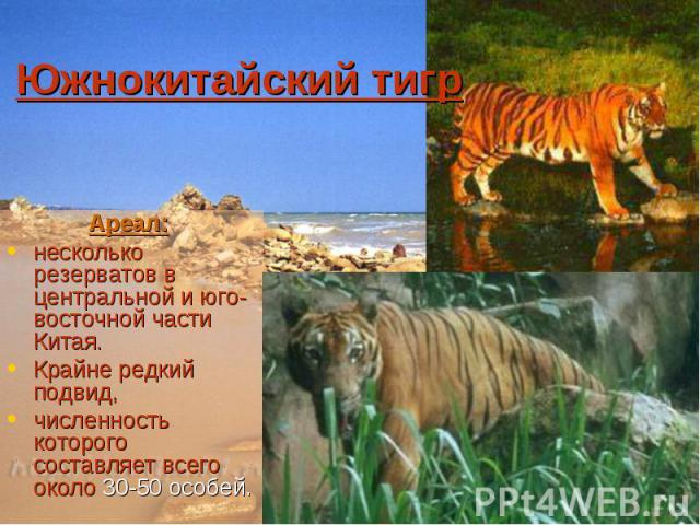 Южнокитайский тигр Ареал: несколько резерватов в центральной и юго-восточной части Китая. Крайне редкий подвид, численность которого составляет всего около 30-50 особей.
