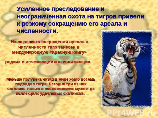Усиленное преследование и неограниченная охота на тигров привели к резкому сокращению его ареала и численности. Из-за резкого сокращения ареала и численности тигр занесен в международную «Красную книгу» редких и исчезающих млекопитающих. Меньше полу…