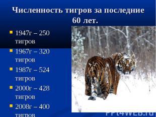 Численность тигров за последние 60 лет. 1947г – 250 тигров 1967г – 320 тигров 19