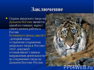 Заключение Охрана амурского тигра на Дальнем Востоке является одной из главных з