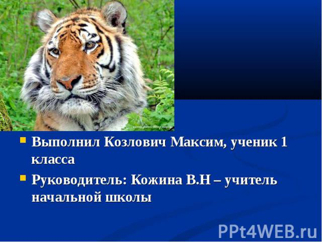 Выполнил Козлович Максим, ученик 1 класса Руководитель: Кожина В.Н – учитель начальной школы