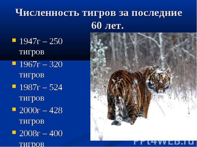 Численность тигров за последние 60 лет. 1947г – 250 тигров 1967г – 320 тигров 1987г – 524 тигров 2000г – 428 тигров 2008г – 400 тигров