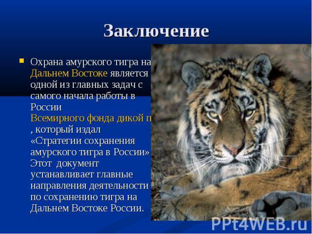 Заключение Охрана амурского тигра на Дальнем Востоке является одной из главных задач с самого начала работы в России Всемирного фонда дикой природы (WWF), который издал «Стратегии сохранения амурского тигра в России». Этот документ устанавливает гла…