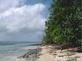 Тихий океан это Самый: Большой по объему 710млн км3 большой по площади 49% миров
