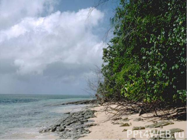 Тихий океан это Самый: Большой по объему 710млн км3 большой по площади 49% мирового океана или 178,6млн км2 глубокий 11022м (Марианский желоб) изобилующий островами густонаселенное побережье сильные ветры высокие и длинные ветровые волны 34м разруши…