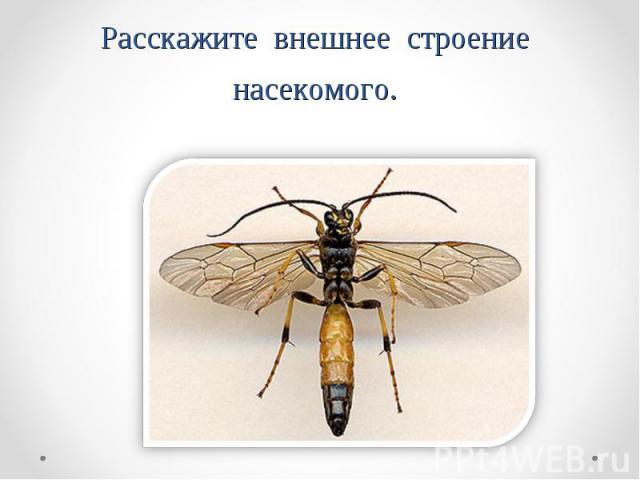 Расскажите внешнее строение насекомого.