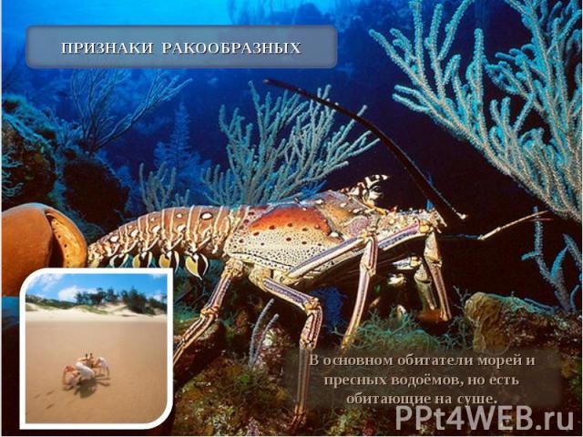 ПРИЗНАКИ РАКООБРАЗНЫХ В основном обитатели морей и пресных водоёмов, но есть обитающие на суше.