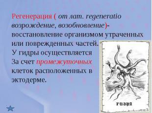 Регенерация ( от лат. regeneratio возрождение, возобновление)- восстановление ор