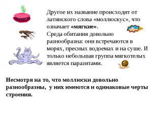 Другое их название происходит от латинского слова «моллюскус», что означает «мяг