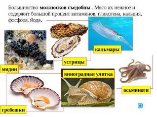 Большинство моллюсков съедобны . Мясо их нежное и содержит большой процент витам