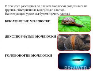 В процессе расселения по планете моллюски разделились на группы, объединенных в