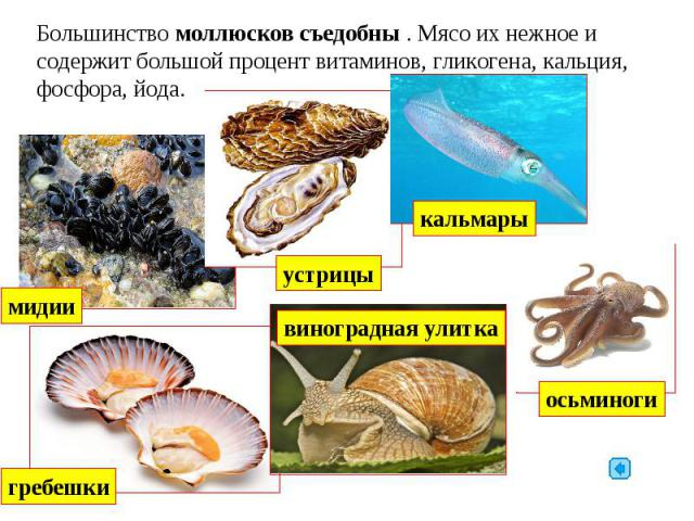 Большинство моллюсков съедобны . Мясо их нежное и содержит большой процент витаминов, гликогена, кальция, фосфора, йода.