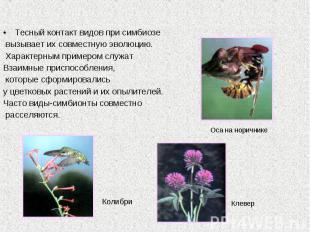 Тесный контакт видов при симбиозе вызывает их совместную эволюцию. Характерным п