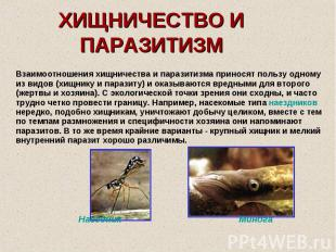 ХИЩНИЧЕСТВО И ПАРАЗИТИЗМ Взаимоотношения хищничества и паразитизма приносят поль