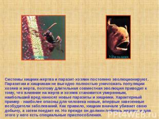 Системы хищник-жертва и паразит-хозяин постоянно эволюционируют. Паразитам и хищ